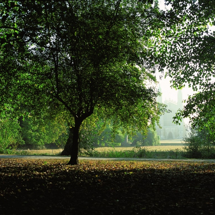 Cambridge Kings Trees